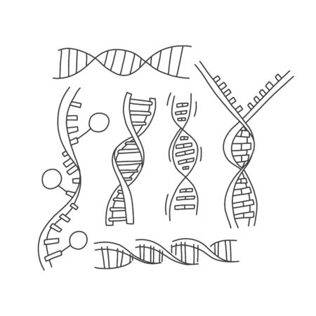 Information set DNA helix sketch hand drawn. Vector illustration Anonymous DNA test to determine kinship and confirm paternity. A DNA gene test examines certain parts of the genome. 向量圖像