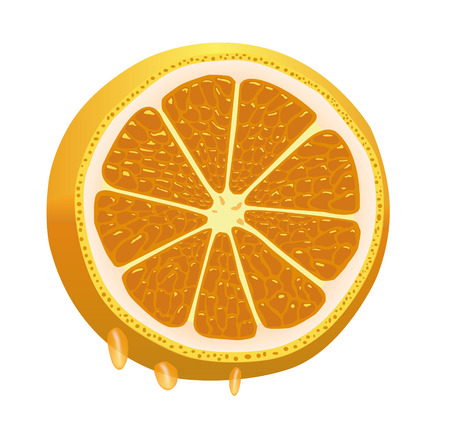 Nice juicy sliced orange, dripping with juice Vector