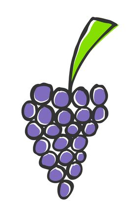 Hand drawn grapes, doodle illustration Stock Vector - 12372301