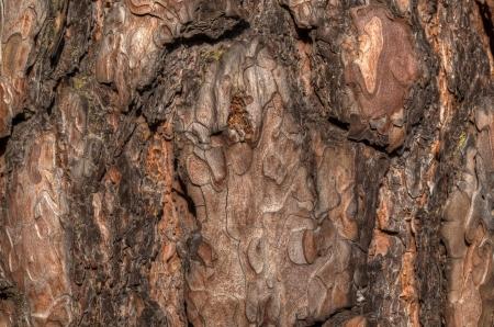 Wood, crust texture