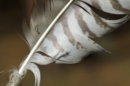Macro detail of feather photo