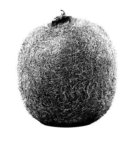 Kiwi fruit isolated on white background, sketched vector
