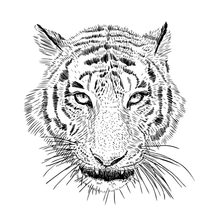 Hand drawn vector black and white artistic portrait of tiger head isolated on white background. Wild cat illustration. Ink drawing Vetores