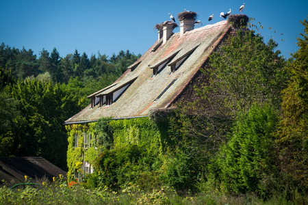 Overgrown house with storks