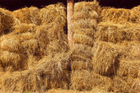 Dried stalks of grain, used especially as fodder or as material for thatching, packing, or weaving. Hay bales in the barn, shelter. Lots of hay bales. Straw bales background Stok Fotoğraf