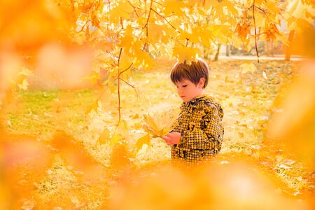 Autumn concept. Baby boy hanging yellow maple leaves. Moment of inspiration. Best autumn picture. Trend autumn colors. Kids fashion. Children psychology backgroud. Copy space