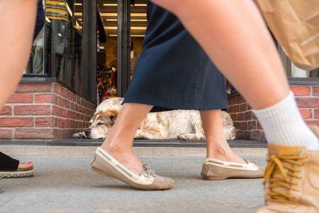 アテネの賑やかなショッピング街。歩道で休んでいる犬。通りに行く人々の足。人々の多様性。都市のシーンの背景。靴をクローズアップして群衆の足。都市生活。 写真素材