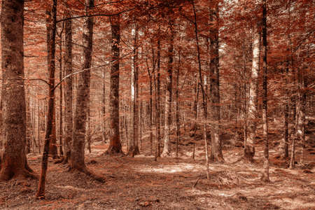 Point of view in a forest in the Italian mountains