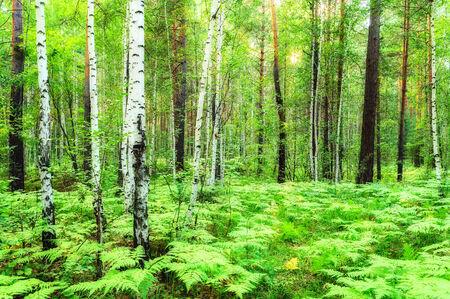 forest landscape: Forest landscape, soft filter Stock Photo
