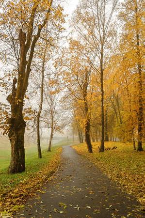 novgorod: Autumn park in the fog, Veliky Novgorod