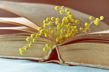 Spring background with old book and mimosa flowers. Shallow DOF