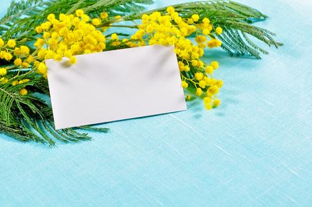 8 March background - white card in the mimosa flowers Stok Fotoğraf