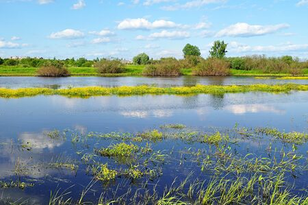 veliky: Spring - river overgrown with yellow flowers in sunny day