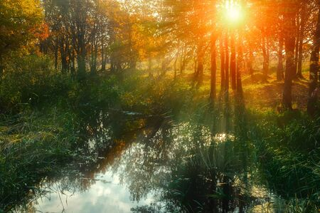 Autumn forest landscape with yellowed autumn trees and forest pond in sunset sunny weather