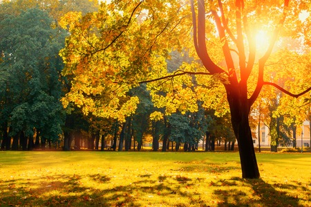 Autumn landscape. Sunny autumn park lit by bright sunshine. Autumn trees in the park in sunny nice weather