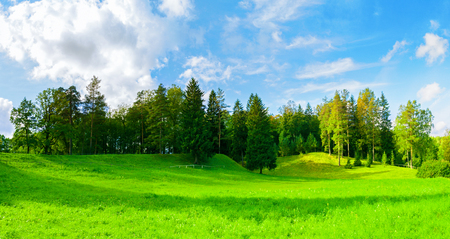 Forest spring landscape - dense forest trees in the valley in sunny weather, panoramic scene of spring nature