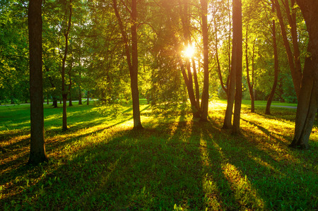 Summer sunset landscape - trees with grass on the foreground and sunlight shining through the trees