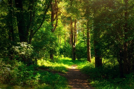 Forest landscape in sunny weather - forest trees and narrow path lit by sunset light. Forest nature in sunny day Stock Photo