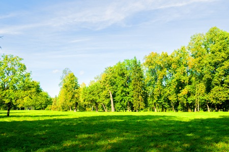 Summer landscape in sunny weather - forest trees growing in the park. Summer park nature in sunny day