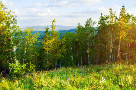 Forest landscape with mixed forest trees on the mountain slope and lake under soft sunset light - mountain forest summer nature scene Stock fotó