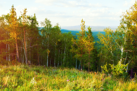 Forest mountain landscape - mixed forest trees on the mountain slopes under soft sunset light - mountain forest summer nature