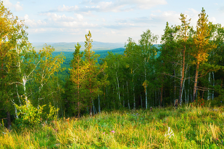 Forest sunset landscape with forest trees growing on the mountain slopes - mountain forest summer nature