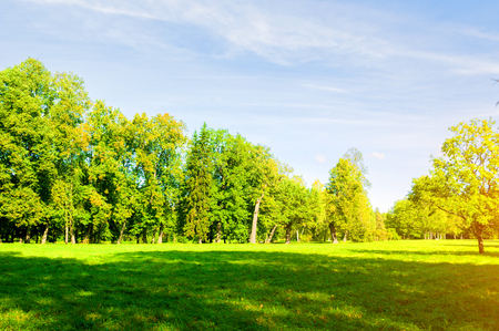 Summer landscape in sunny afternoon - forest trees growing in the park. Summer park nature in sunny day