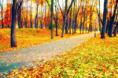 Autumn landscape - trees with golden foliage and fallen autumn leaves in city park alley in sunny evening. Diffusion filter applied Stock Photo