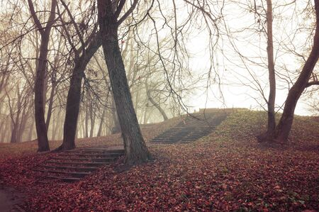 Autumn foggy forest with old bare trees, ruined stone staircade and fallen red leaves on the ground. Colorful mysterious landscape in vintage tones. Soft filter applied