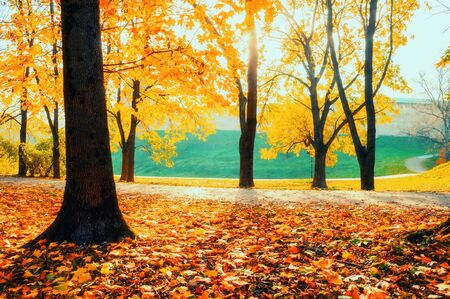 Autumn landscape - yellowed trees and fallen autumn leaves in city park alley in sunny evening. Colorful autumn landscape scene