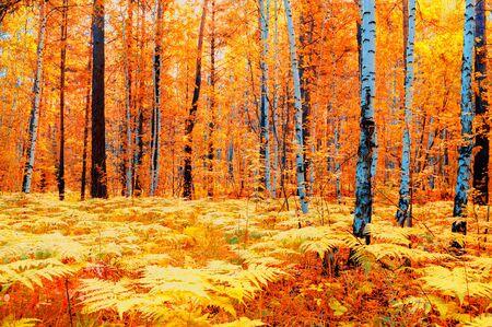 Paisaje de bosque otoñal en tiempo nublado - árboles otoñales de bosque amarillo y helechos en primer plano. Naturaleza del bosque en día de otoño, filtro de difusión. Foto de archivo