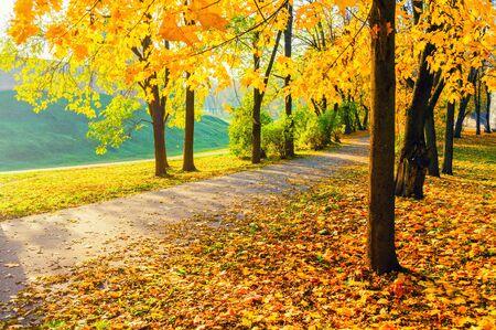 Paesaggio autunnale - alberi ingialliti e foglie autunnali cadute nel vicolo del parco cittadino in serata soleggiata. Paesaggio autunnale in giornata di sole. Filtro di diffusione applicato
