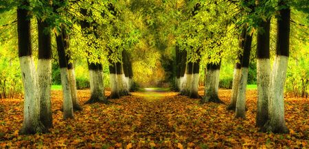 Autumn landscape with bright autumn trees and yellow fallen leaves. Autumn alley in the city park, panoramic view Banco de Imagens
