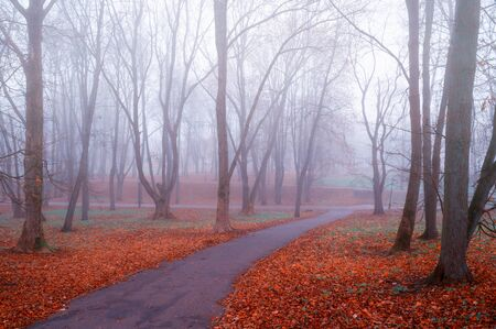 Autumn landscape. Foggy autumn park alley with bare autumn trees and dry red fallen autumn leaves on the ground