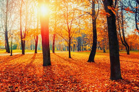 Autumn picturesque park landscape. Autumn trees with yellowed foliage in October morning park. Colorful autumn landscape in bright tones
