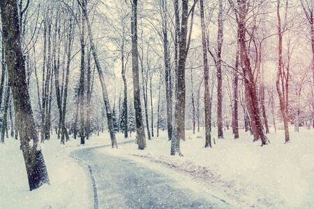 Winter landscape with snowy winter trees along the winter park alley - winter snowy scene in soft vintage tones Stock fotó
