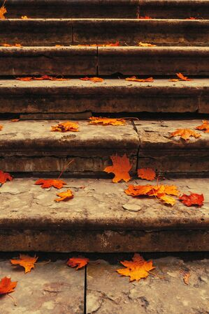 Autumn leaves background. Fallen maple leaves on the old textured stone staircase - autumn city landscape, retro tones and diffusion filter applied