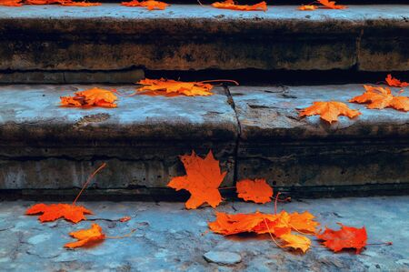 Autumn leaves background. Fallen maple leaves on the old textured stone staircase - autumn October landscape, cold tones applied