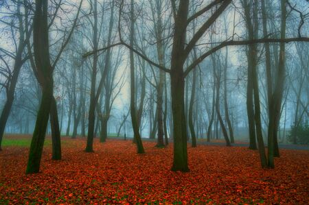Autumn in November. Foggy autumn dusky landscape with bare autumn trees and red fallen leaves. Autumn park in dense fog. Soft filter applied Stock fotó