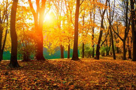Herfst zonnig landschap. Herfstparkbomen en gevallen herfstbladeren op de grond in het park op zonnige oktoberdag Stockfoto