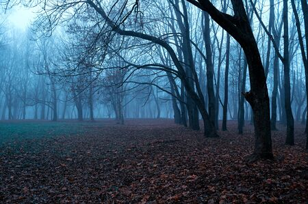 Autumn mysterious landscape - foggy forest with bare trees and fallen red autumn leaves on the ground, misty park scene Stock fotó