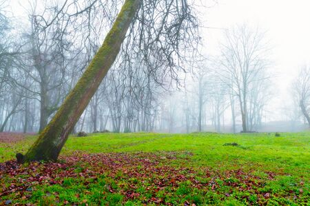 Autumn foggy landscape. Autumn park trees and fallen autumn leaves on the ground in the park in foggy October day