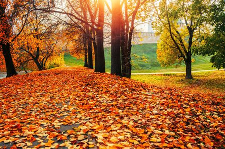Autumn sunny colorful landscape. Autumn park trees and fallen autumn leaves on the ground along the park alley in sunny October evening