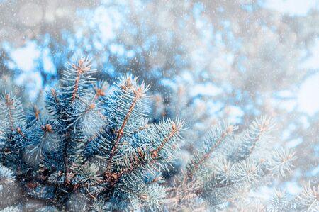 Schneebedeckter Hintergrund des Weihnachtswinters. Blaue Kiefernzweige unter fallendem Schnee des Winters, Nahaufnahme der Winterwaldnatur mit freiem Platz für Weihnachtstext