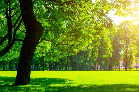 Summer landscape - colorful summer city park with deciduous green trees in sunny weather