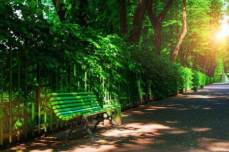 Summer landscape - colorful summer city park with deciduous green trees and bench along the alley in sunny weather