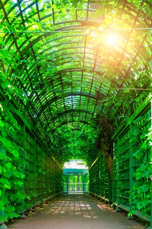 Summer landscape - metal ached tunnel covered with green climbing plants, summer garden landscape Stock fotó