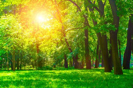 Summer sunny park landscape. Summer city park with deciduous green trees in sunny weather Stock fotó