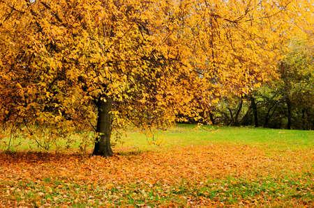 Autumn landscape, autumn park with fallen leaves, soft focus processing - beautiful autumn landscape in cloudy weather