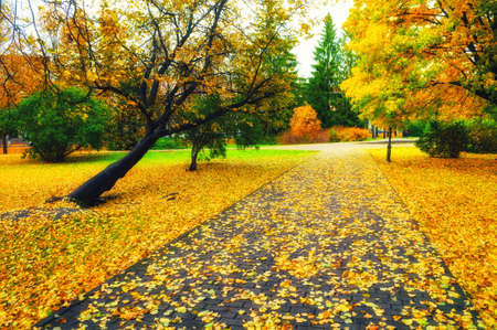 Autumn landscape. Autumn alley in the city park. Colorful autumn park alley in cloudy weather